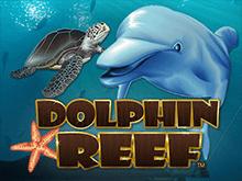 Играйте в Риф Дельфина на деньги